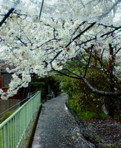 image/tsubakiya-2006-04-11T21:51:31-1.jpg